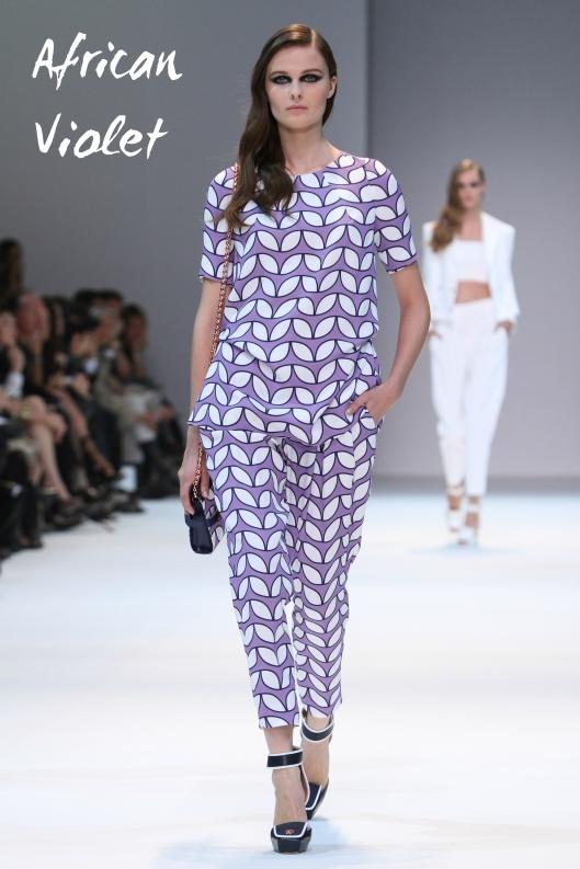 spring-african-violet-a